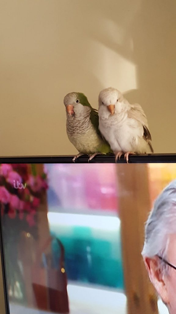 Problem Parrots - Parrot rescue and welfare organisation